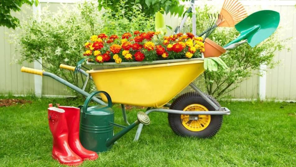 sad 1 - Сад и огород